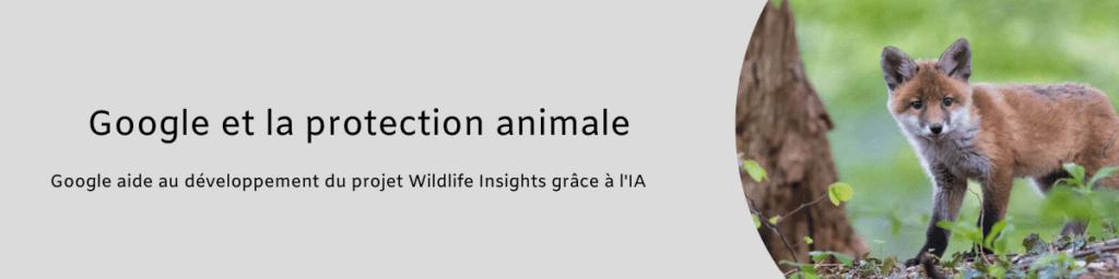 Projet Wildlife Insights 1